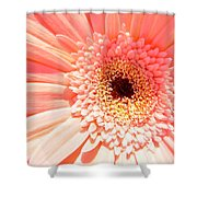 1673-001 Shower Curtain