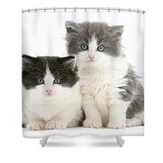 Kittens Shower Curtain