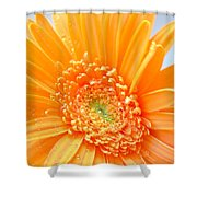 1726c Shower Curtain