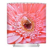 1733-001 Shower Curtain