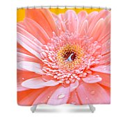 1755-001 Shower Curtain