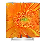 1795-001 Shower Curtain