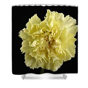 A Carnation Dianthus Caryophyllus Shower Curtain