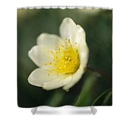 A Close View Of A Wildflower In Yoho Shower Curtain