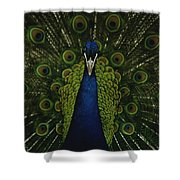 A Male Peacock Displays His Beautiful Shower Curtain