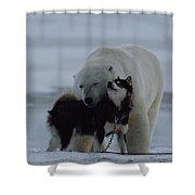 A Polar Bear Ursus Maritimus Shower Curtain
