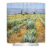 Agave Cactus Field In Mexico Shower Curtain