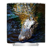 Alligator In Mississippi River Shower Curtain