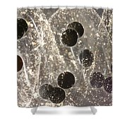 American Toad Eggs Shower Curtain by Ted Kinsman