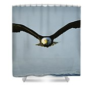 An American Bald Eagle In Flight Shower Curtain