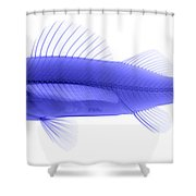 An X-ray Of Yellow Perch Shower Curtain