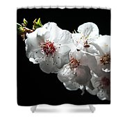 Apricot Flowers At Night Shower Curtain