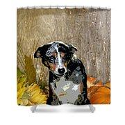 Australian Cattle Dog Sheltie Mix Shower Curtain