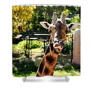 Baringo Giraffe Shower Curtain