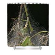 Bird-cherry Ermine Caterpillars Shower Curtain