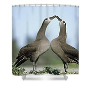 Black-footed Albatross Phoebastria Shower Curtain