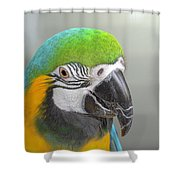 Blue And Yellow Macaw Shower Curtain