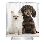 Blue-point Kitten & Dachshund Shower Curtain