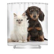 Blue-point Kitten & Dachshund Shower Curtain by Mark Taylor