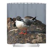 Bonaparts Gull Shower Curtain