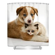 Border Collie And Birman-cross Kitten Shower Curtain