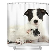Border Collie Pup And Guinea Pig Shower Curtain