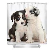 Boreder Collie Puppies Shower Curtain