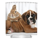 Boxer Puppy And Netherland-cross Rabbit Shower Curtain