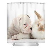 Boxer Puppy And Young Fluffy Rabbit Shower Curtain
