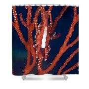 Bright Red Crab On Fan Coral, Papua New Shower Curtain