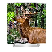 Browsing Elk In The Grand Canyon Shower Curtain