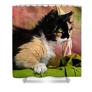 Calico Cat In Basket Shower Curtain