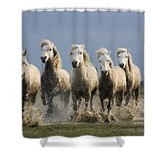 Camargue Horse Equus Caballus Group Shower Curtain