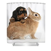 Cavapoo Pup And Sandy Netherland-cross Shower Curtain