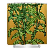 Centaurea Montana, Bachelors Button Shower Curtain