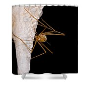 Chinese Cave Cricket Shower Curtain