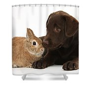Chocolate Labrador Pup Shower Curtain