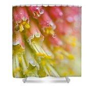 Close Up Of Flower Stamen Shower Curtain
