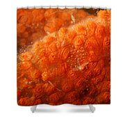 Close-up Of Live Sponge Shower Curtain