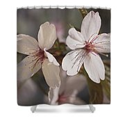 Close View Of Cherry Blossoms Shower Curtain