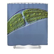 Closterium Sp. Algae Lm Shower Curtain by M. I. Walker