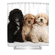 Cockerpoo Puppies Shower Curtain