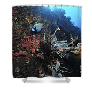 Colorful Reef Scene With Coral Shower Curtain