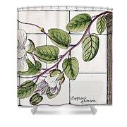 Colosseum: Flower Shower Curtain