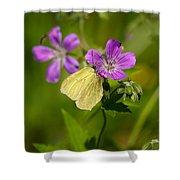Common Brimstone Shower Curtain
