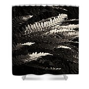 Common Polypody Shower Curtain