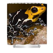 Crowned Poison Frog Shower Curtain