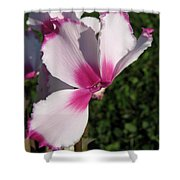 Cyclamen Named Victoria Shower Curtain