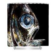 Deep Sea Hatchetfish Shower Curtain