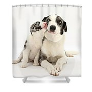 Dog And Puppy Shower Curtain